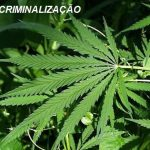 Marcelo Naves: 'o proibicionismo não diminuiu o comércio de drogas'