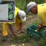 Programa Justiça Capixaba destaca projeto idealizado pela PCr de São Mateus (ES)